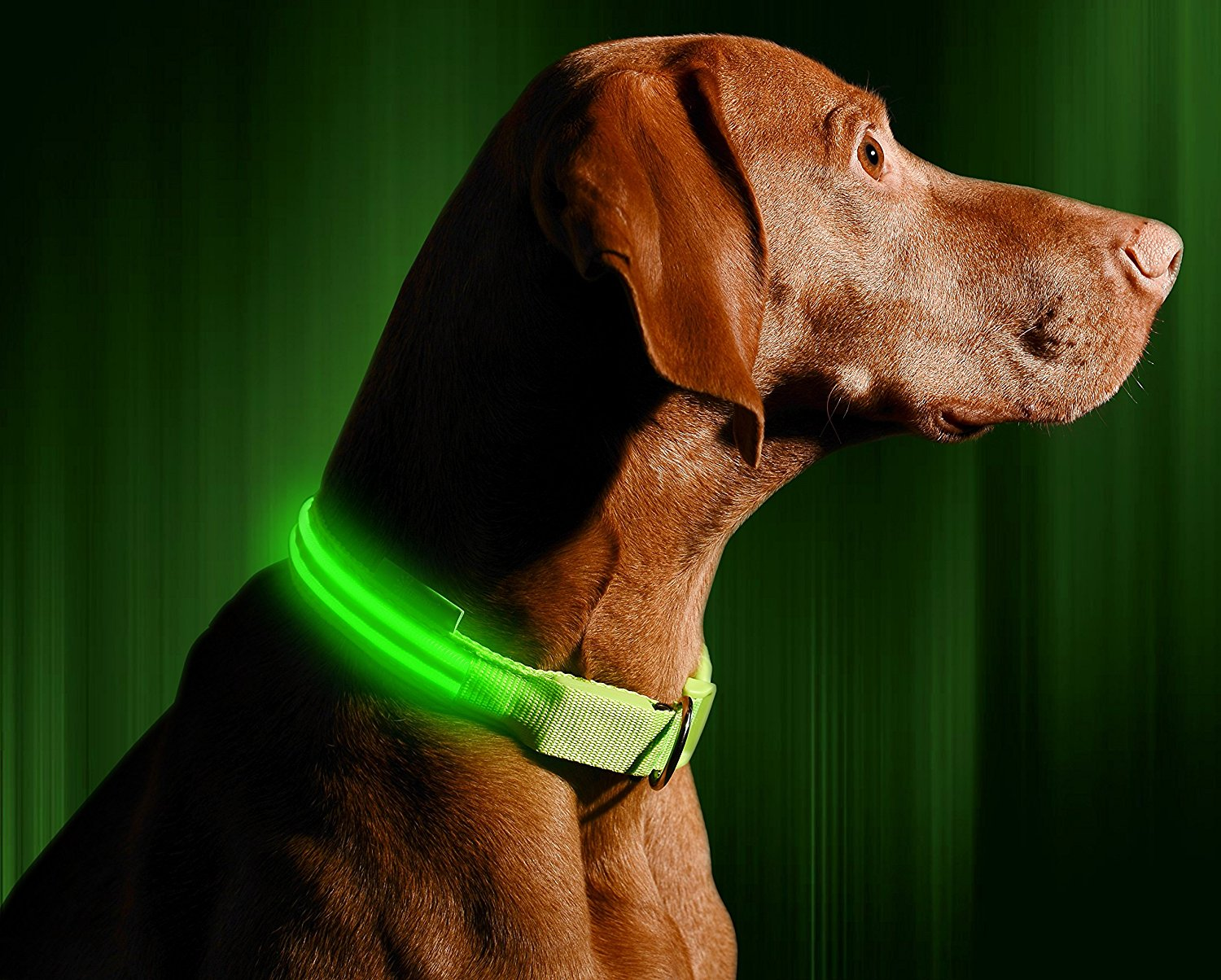 LED Dog Collar – USB Rechargeable
